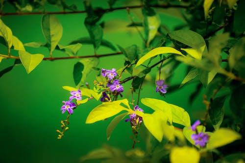 Základová fotografie zdarma na téma fotografie, fotografie přírody, květiny, příroda pozadí