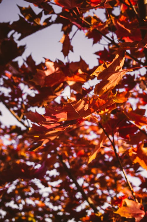 Free stock photo of autumn, fall, laef, leaves