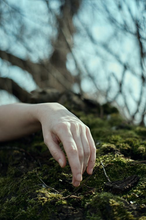 Hand touching green moss in woods