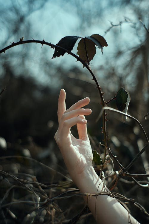 Crop unrecognizable female pulling finger to thorns of wild plant with dry branches