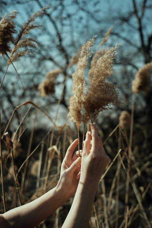 Woman touching dried grass in field