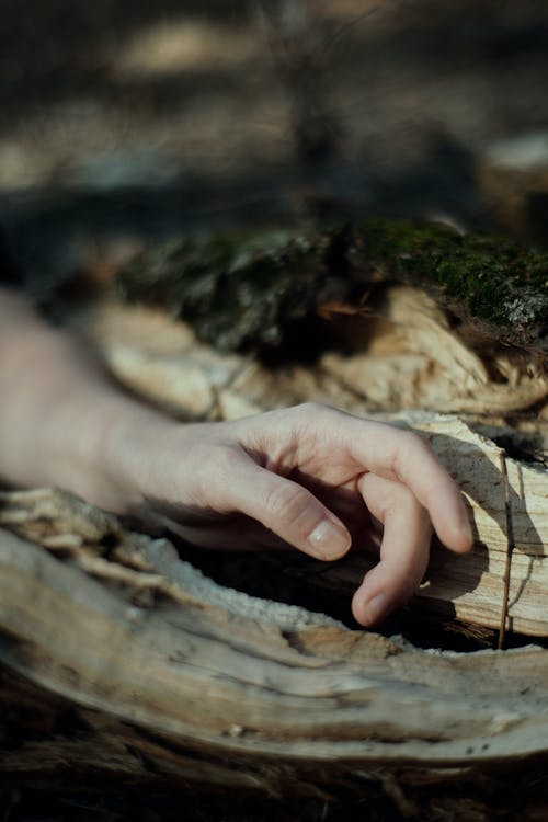 Person touching trunk of tree in forest