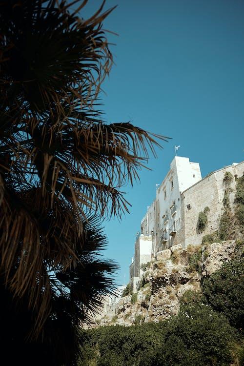 White Concrete Building Near Green Palm Tree