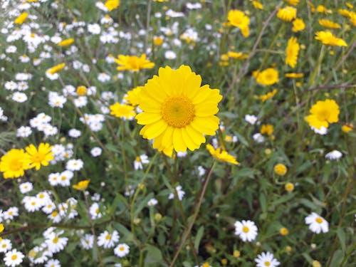 Fotos de stock gratuitas de al aire libre, amarillo, campos