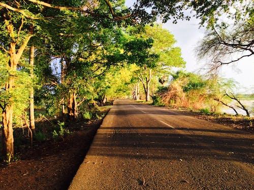 Ảnh lưu trữ miễn phí về đường đẹp tamilnadu