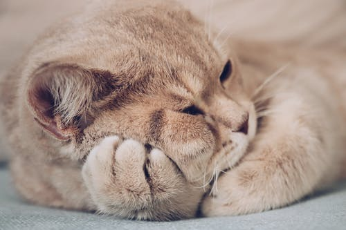 Adorable cat sleeping on paws at home