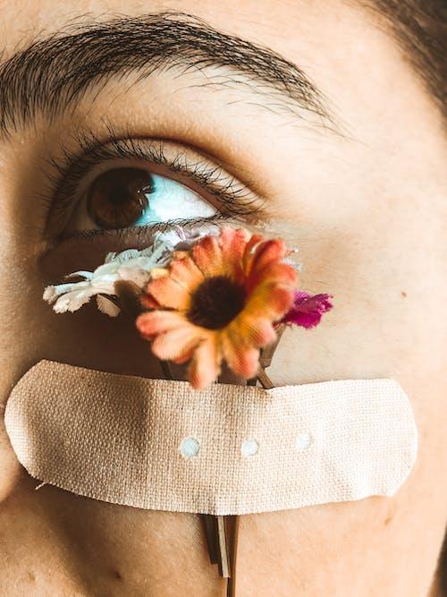 건강한, 깨지기 쉬운, 꽃, 꽃무늬의 무료 스톡 사진