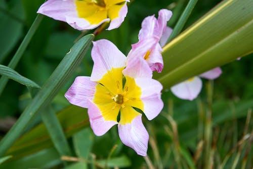 Photos gratuites de botanique, couleurs, la nature