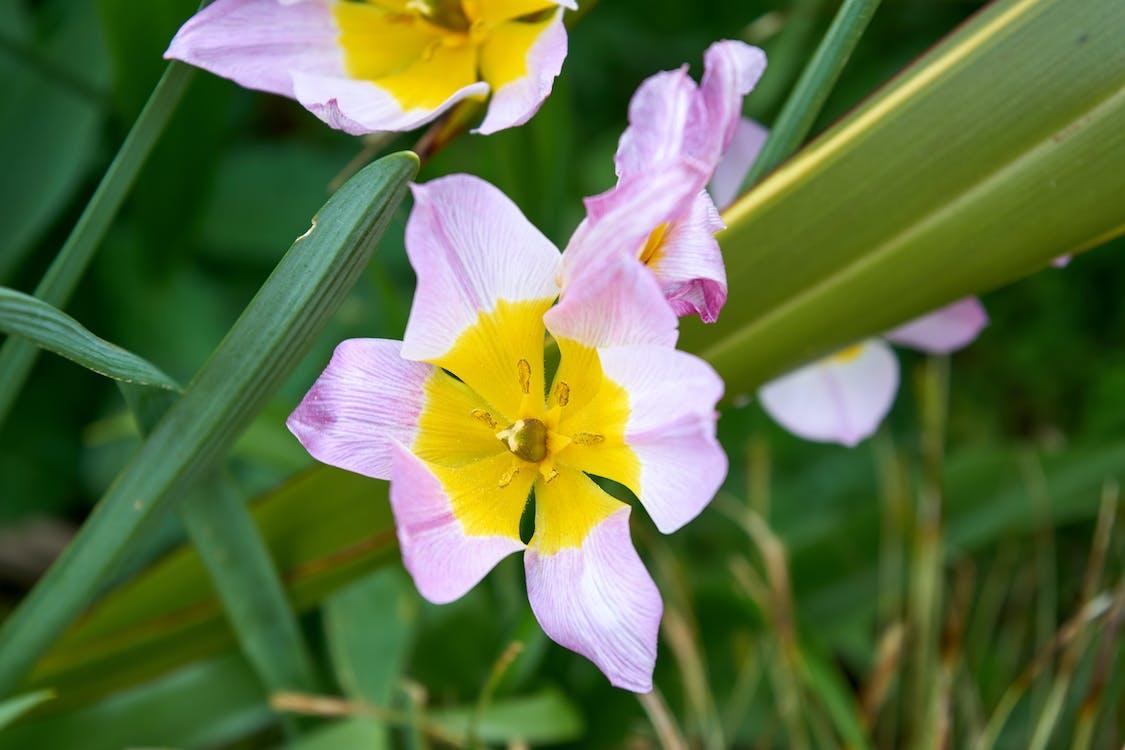 Free stock photo of botanique, couleurs, fleur