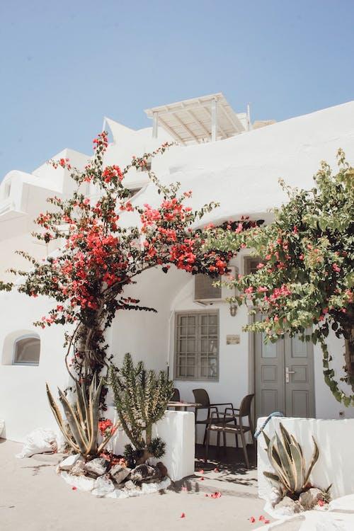 Kostnadsfri bild av arkitektur, blommig, byggnad