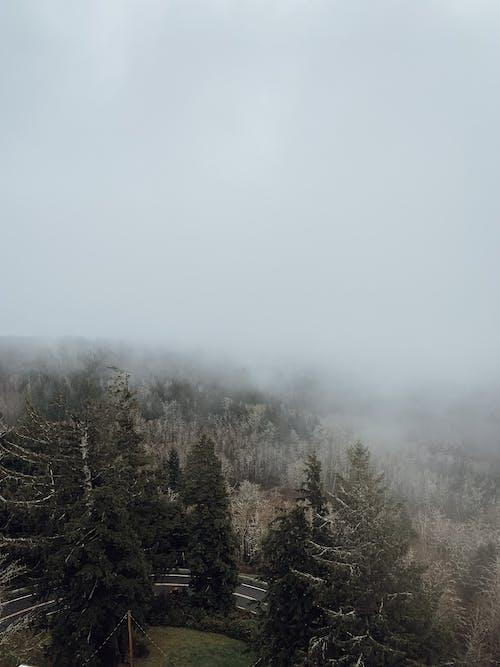 가지, 경로, 고요한의 무료 스톡 사진