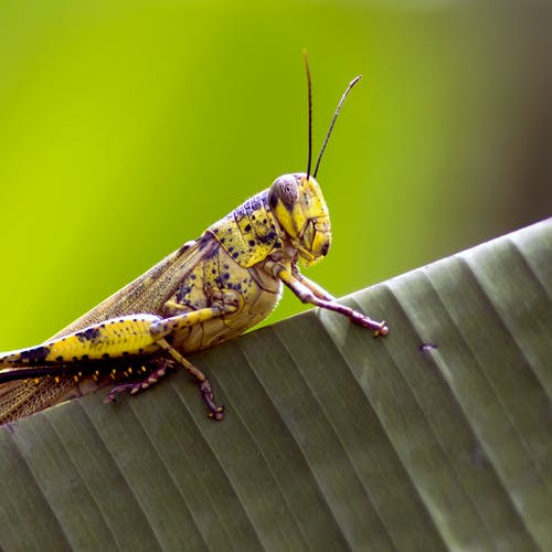 Macro of yellow insect sitting on leaf of exotic plant in garden in daytime