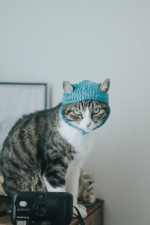Brown Tabby Cat With Blue Knit Cap