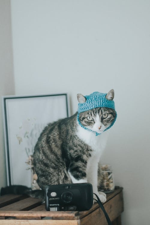 Darmowe zdjęcie z galerii z ciekawość, futro, kot, kotek