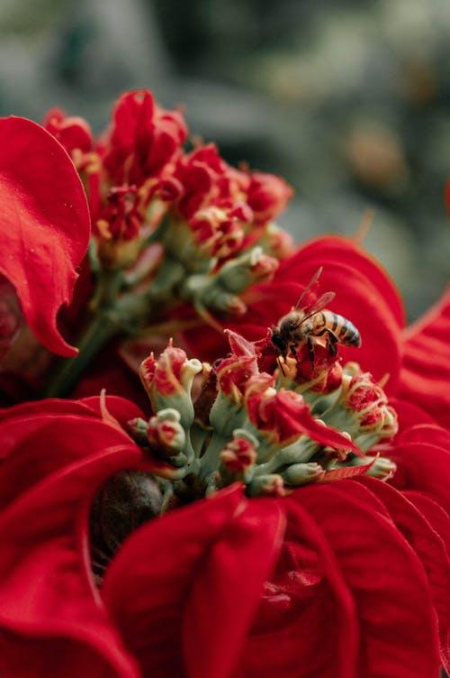 Free stock photo of Beautiful animal, beautiful flower, beautiful flowers, bee