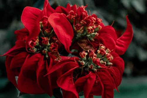 Free stock photo of beautiful flower, beautiful flowers, flower, flowers