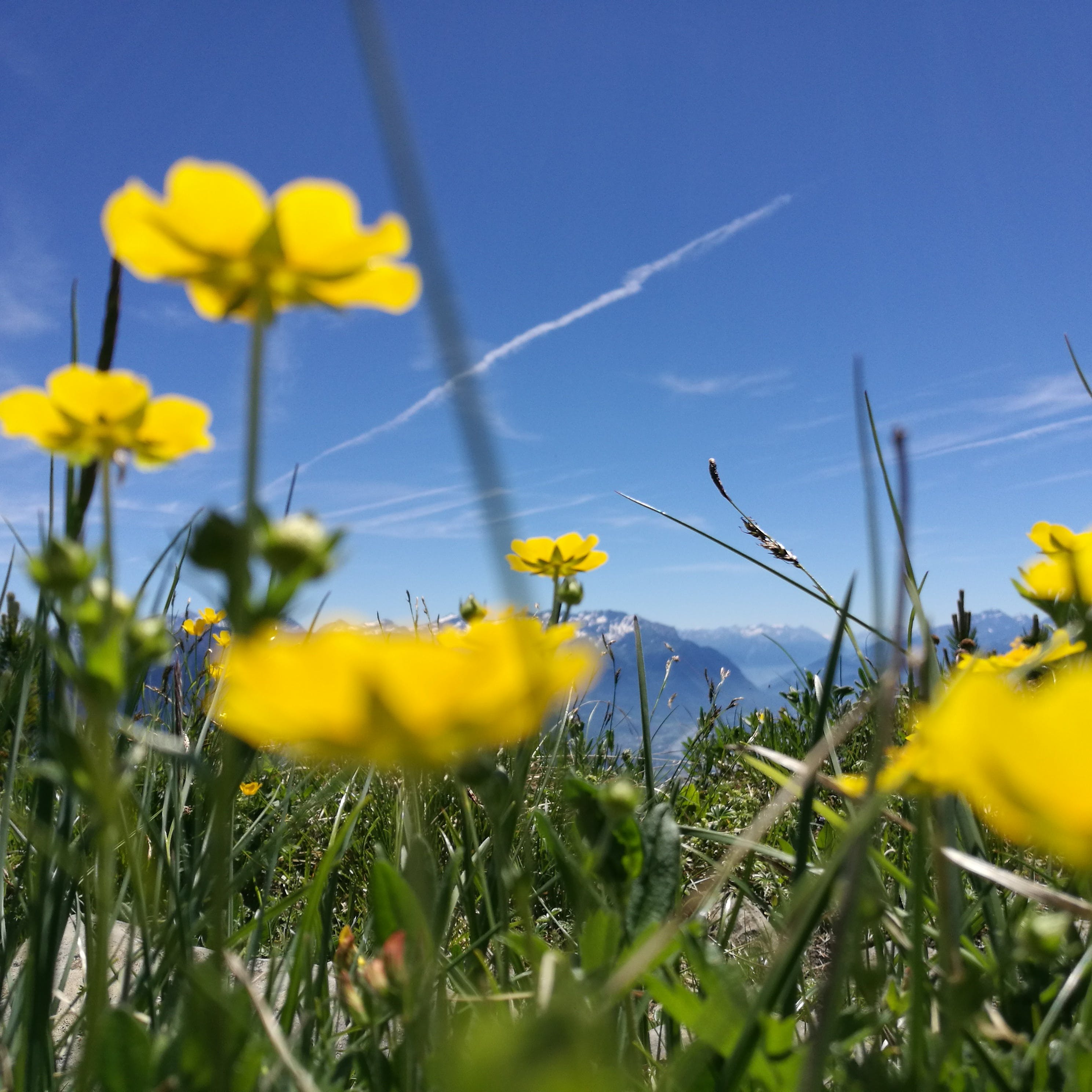 Free stock photo of #alpstein #flowers