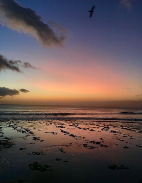 Photos gratuites de algues, atmosphère, brillant, calme