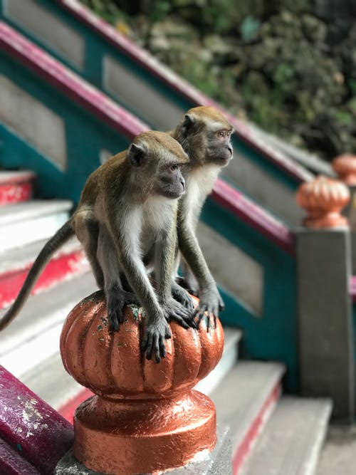 Funny monkeys on staircase railing in national park