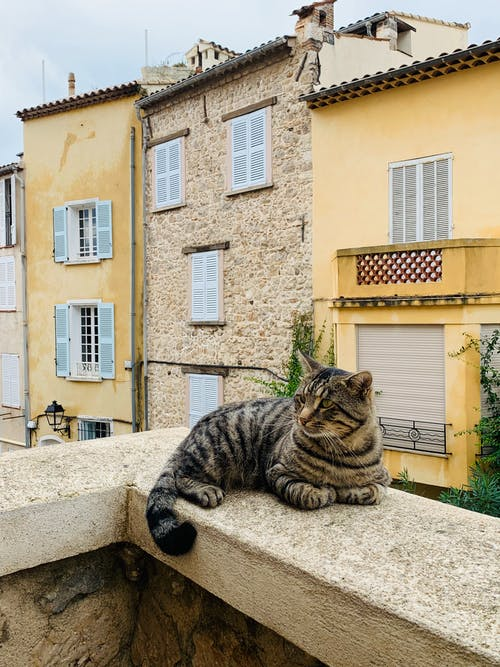 Adorable tabby cat lying on stone railing of balcony with old buildings behind in daytime