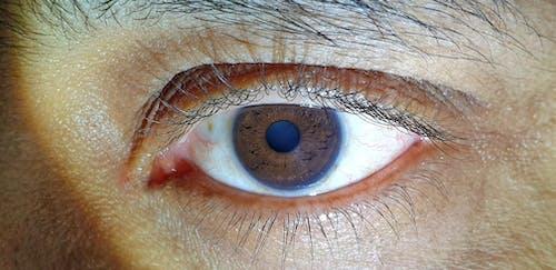 Free stock photo of closeup, eye, human eye