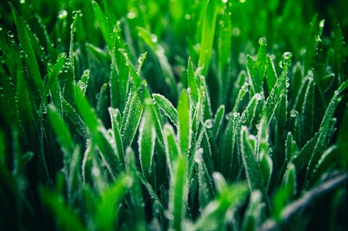 Free stock photo of frost, grass, green