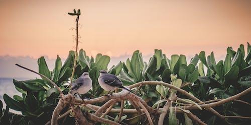 Free stock photo of bird, wildlife photography