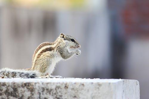 Foto profissional grátis de animal, bonitinho, borrão, close