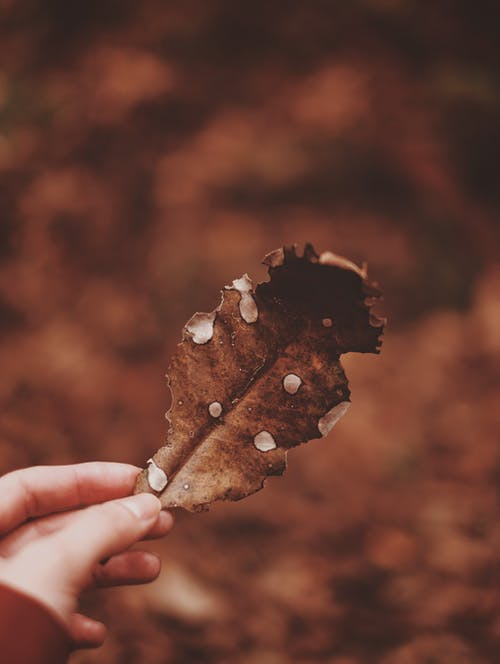 Photo of Person Holding Brown Leaf