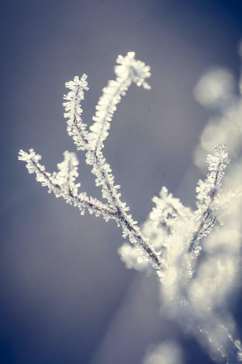 Free stock photo of frozen, macro, winter
