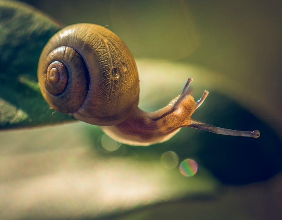 Foto profissional grátis de caracol, caramujo, jardim