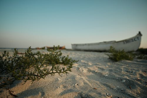 Old ship and bushes in desert