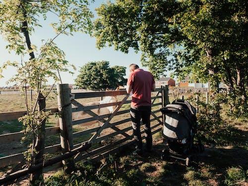 Foto profissional grátis de agricultura, ao ar livre, área, árvores
