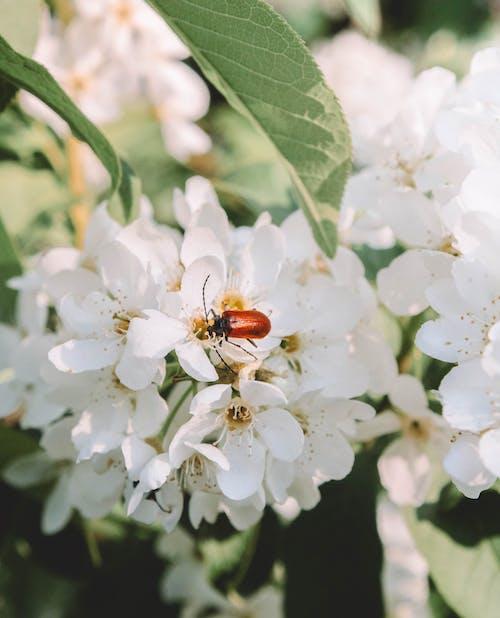 Free stock photo of весна, жучок, зелень, насекомое