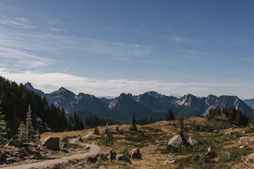 Бесплатное стоковое фото с HD-обои, вечнозеленый, вид на горы, восход