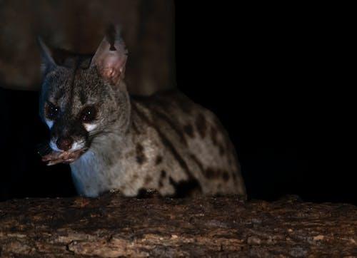 Foto d'estoc gratuïta de gat, natura, naturalesa, nocturn