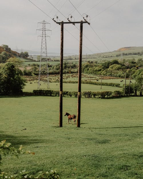 Free stock photo of agriculture, brown horse, electric post, electric posts