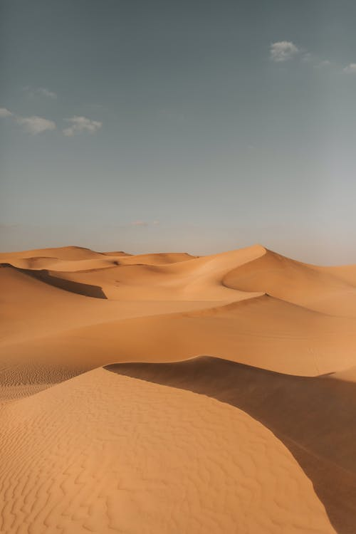 乾旱, 乾的, 垂直 的 免費圖庫相片