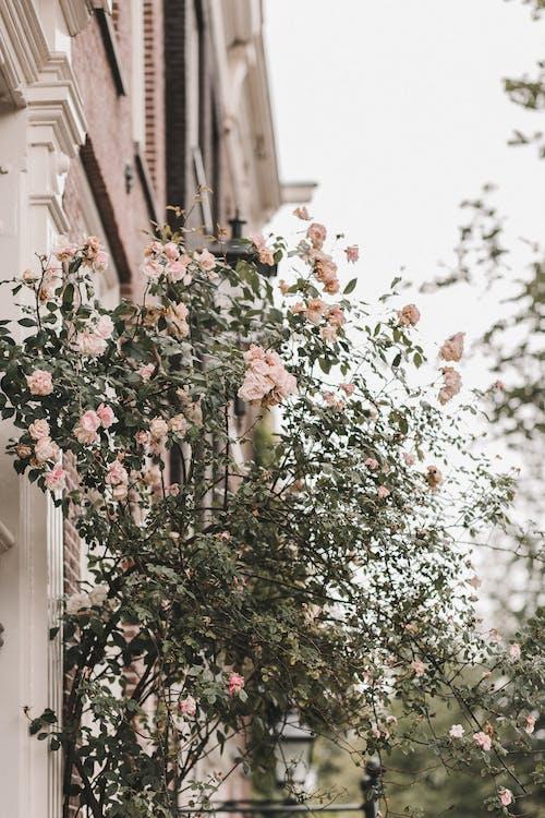 ağaç, bitki örtüsü, büyüme, Çiçek açmak içeren Ücretsiz stok fotoğraf