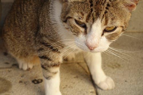 Darmowe zdjęcie z galerii z flor, głowa zwierzęcia, kot