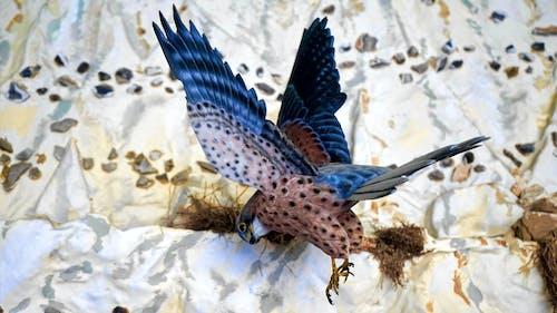 Ảnh lưu trữ miễn phí về bay, cận cảnh, cánh, lông