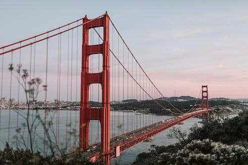 交通系統, 加州, 加州的金門大橋, 吊橋 的 免费素材照片