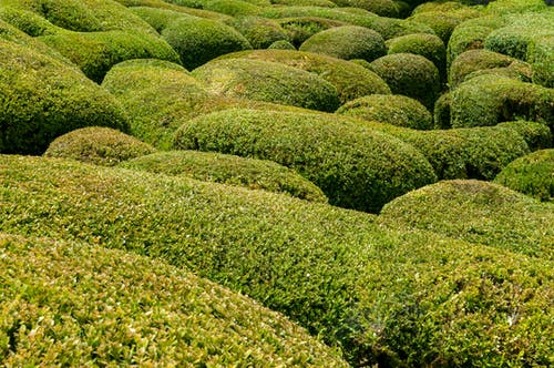 Free stock photo of beautiful, boxwood, castle