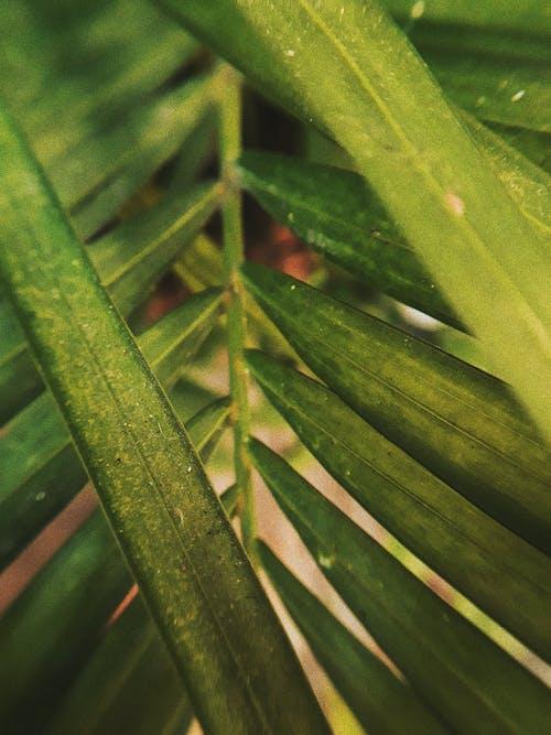 Foto profissional grátis de aumento, botânico, close, cor