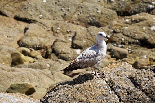 Photos gratuites de bec, faune, goã © land, oiseau