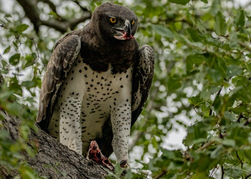 Photos gratuites de aigle, aile, animal, arbre