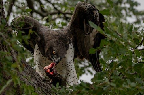 Foto d'estoc gratuïta de a l'aire lliure, àguila, ala, animal