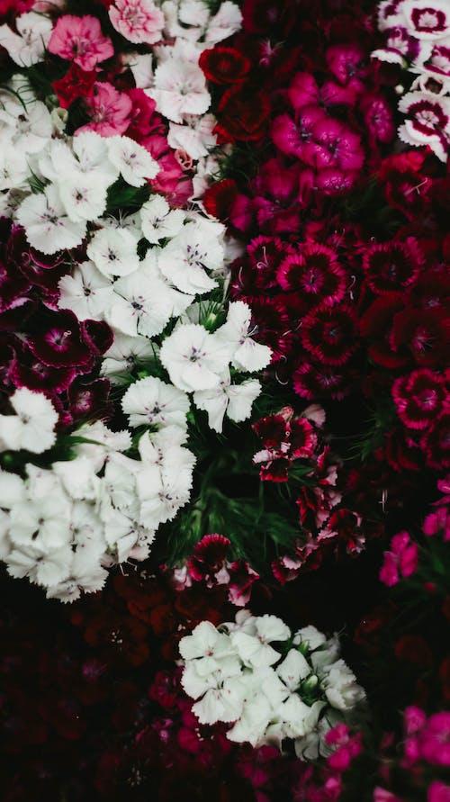 Gratis arkivbilde med årstid, blad, blomst, blomsterblad