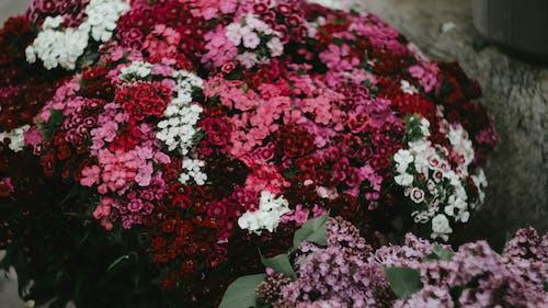 Fotos de stock gratuitas de al aire libre, botánico, brillante, cama
