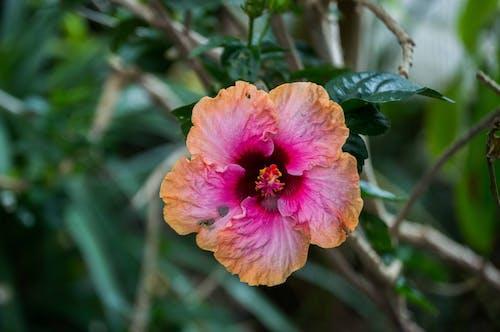 Δωρεάν στοκ φωτογραφιών με λουλούδι, όμορφα λουλούδια, όμορφος, πορτοκάλι